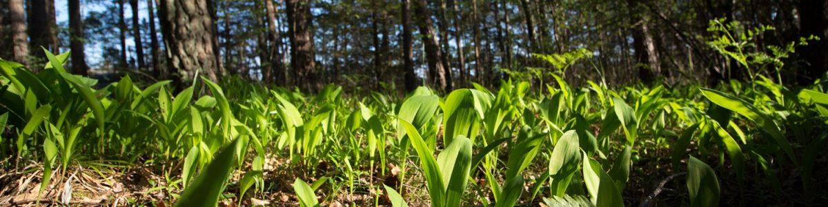 la resilience des systèmes alimentaires - les greniers d'abondance